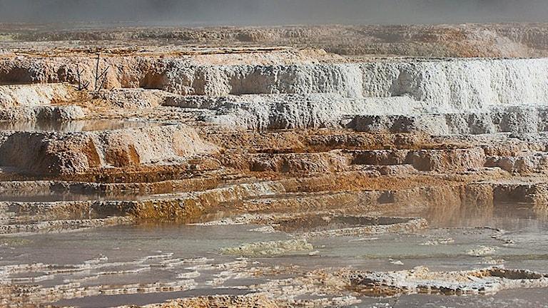 En bild av de heta källorna i Yellowstone
