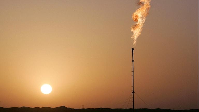 Solnedgång, brungult dis, hög smal skorsten i siluett, stor brinnande gasfackla ur skorstenen
