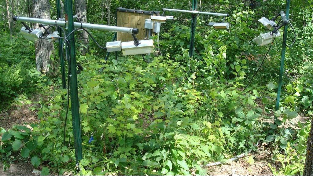 Forskarnas växter i en planteringsruta med kontrollerad belysning och vattentillgång.