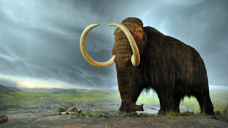 En bild av en mammut vandrandes över slätten.