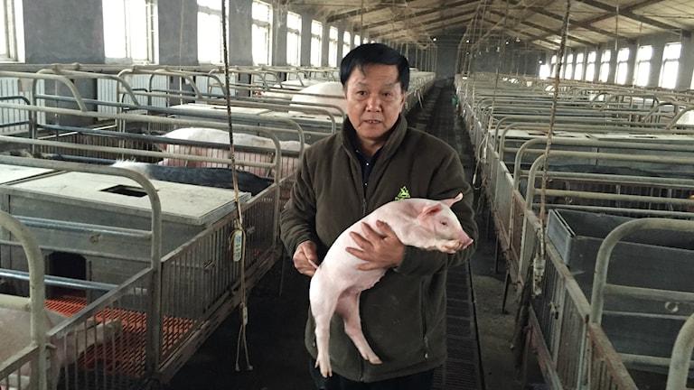 Zhou Chunsheng är svinbonde i Peking och använder till skillnad från de flesta konkurrenter i landet ingen antibiotika till sina grisar. Foto: Johan Bergendorff / SR