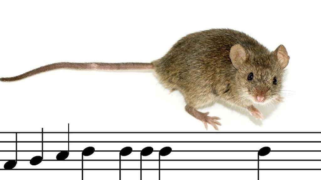 En mus och noter som stackar sig.