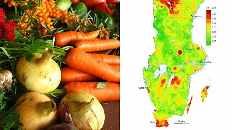 En bild med grönsaker och en karta över Sverige med röda områden där det finns höga halter av kadmium.