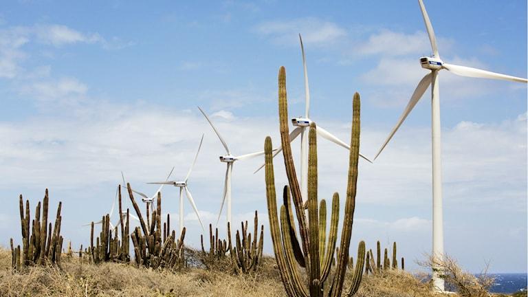Vindkraftverk på Aruba