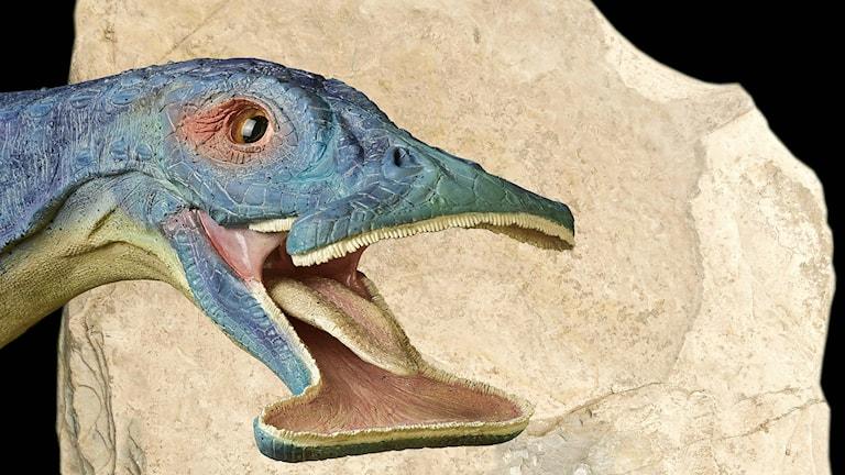 Teckning av 242 miljoner år gammal fossil.