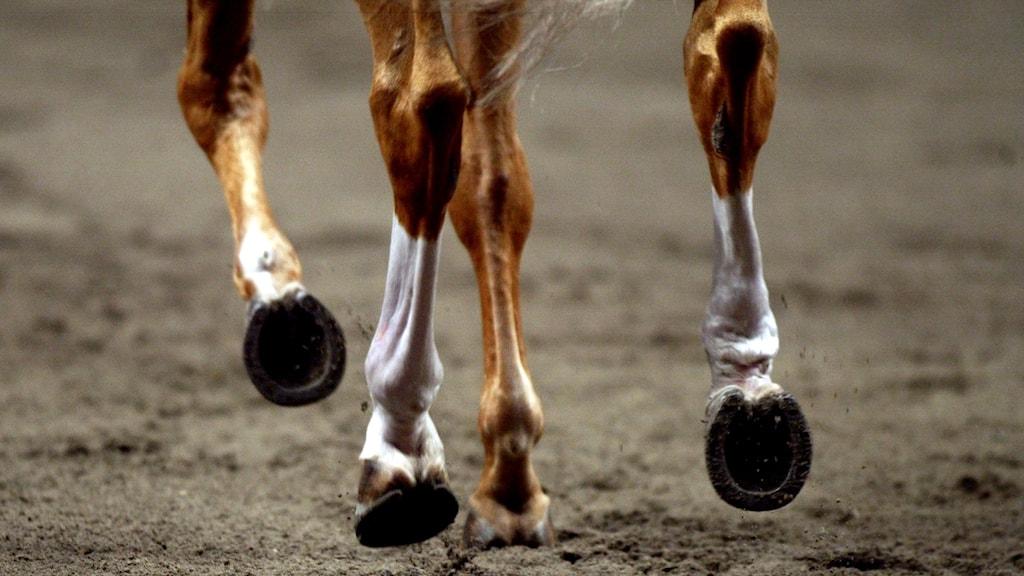 Travande hästben.