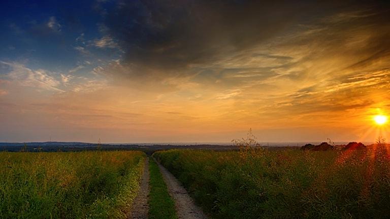 Solen går ned över fälten, en grusväg ringlar sig emellan.