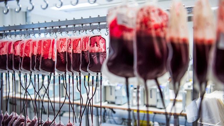 Blodpåsar på rad för filtrering vid Karolinska universitetssjukhuset i Huddinge