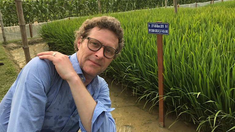 Man, Gustaf Klarin,  framför risfält