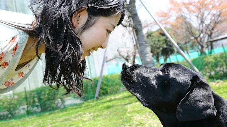 En tjej och en svart labrador som tittar varandra i ögonen.