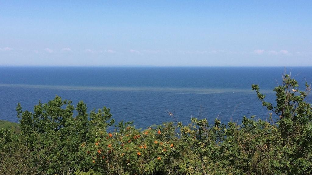 havet och ett band av algblomning