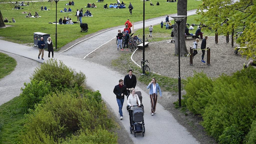 En stor park med gröna ytor. Människor rör sig i olika grupper i parken.