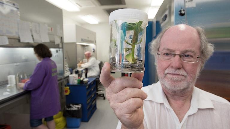 i labb håller upp en glasburk med grön planta