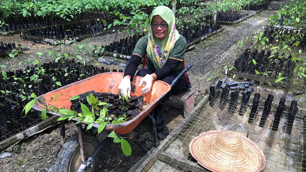Kvinna med skottkärra i en trädplantering.