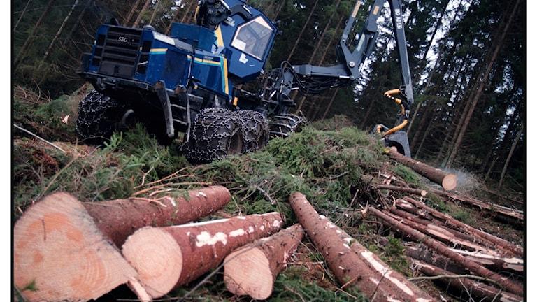Några fällda träd framför en skogsmaskin