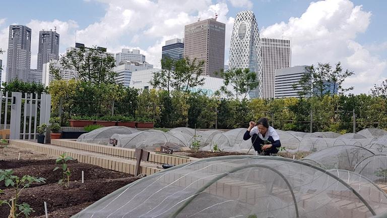 Kvinna planterar ovanpå ett tak med utsikt över Tokyos skyskrapor.