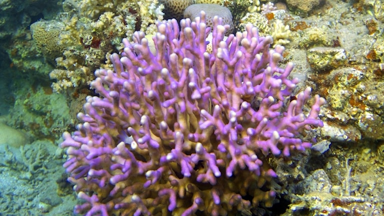 Närbild på en korall i havet.