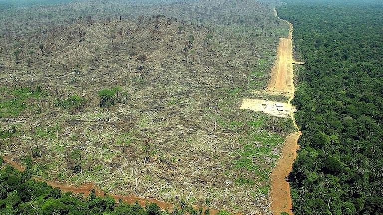 Område i Brasilien, som avverkats för att ge plats åt odling av sojabönor.