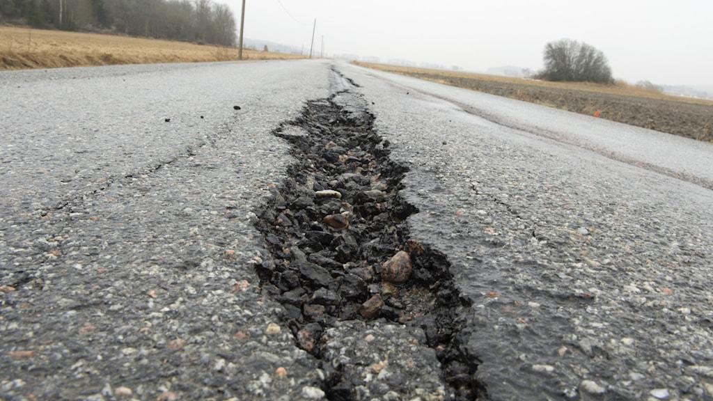 Sprickbildning i asfalterad väg.