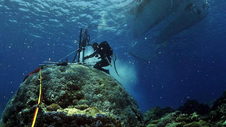 Forskarna som studerar historiska klimatförändringar i bland annat koraller.