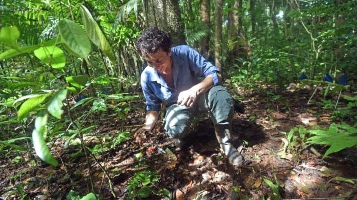 Forskaren Paul-Camilo Zalamea gräver upp frön i Panama för att studera vilka svampar som de kan ha attraherat.