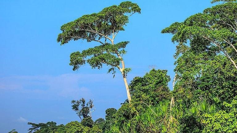 Metan bildas i syrefria miljöer, i Amazonas produceras metanet i sediment och transporteras via trädstammar till atmosfären.