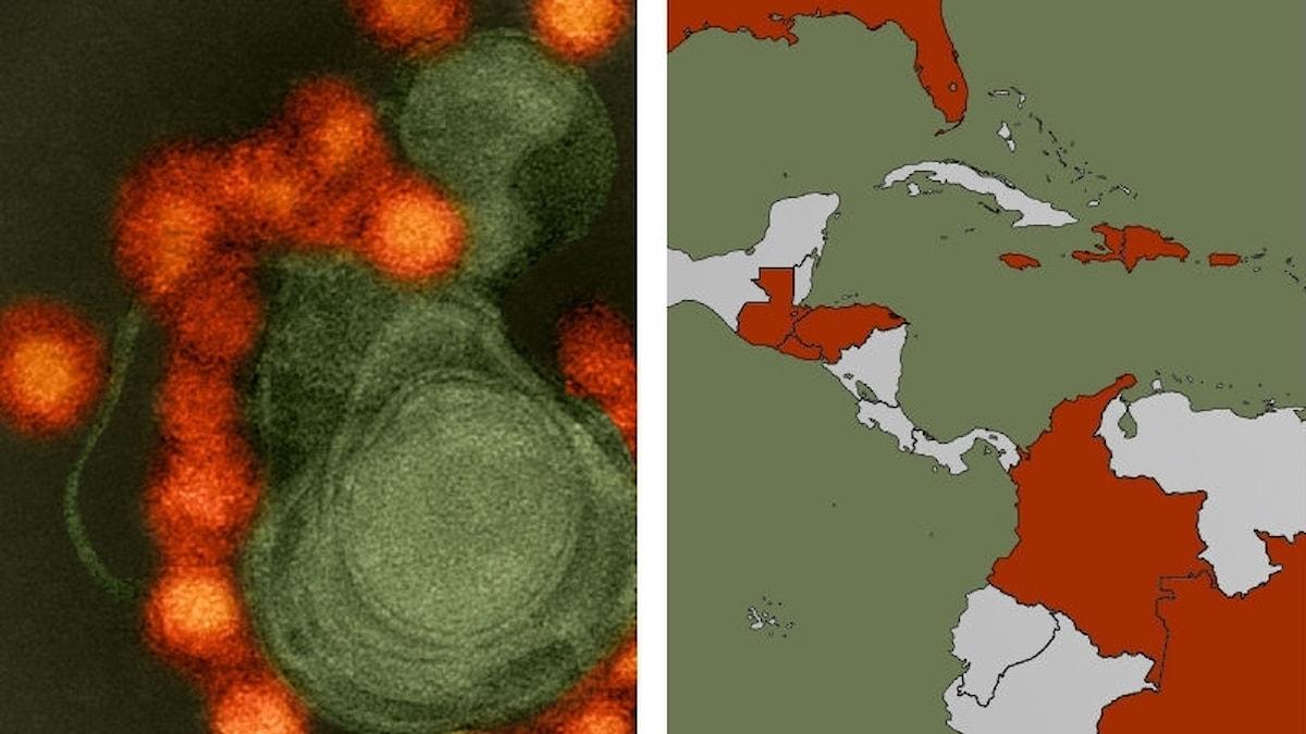 Zikaviruset och en karta på drabbade länder.