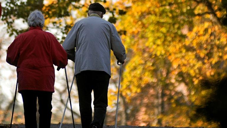 Ett äldre par promenerar med stavar på hösten.