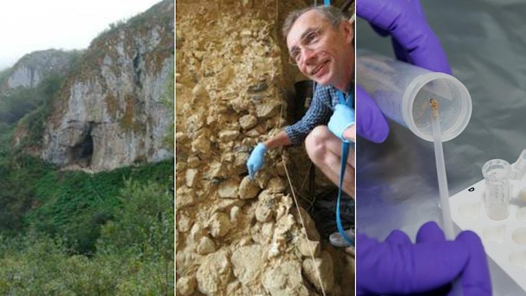 Kollage över Chagyrskayagrottan, Svante Pääbo och provtagning av sediment
