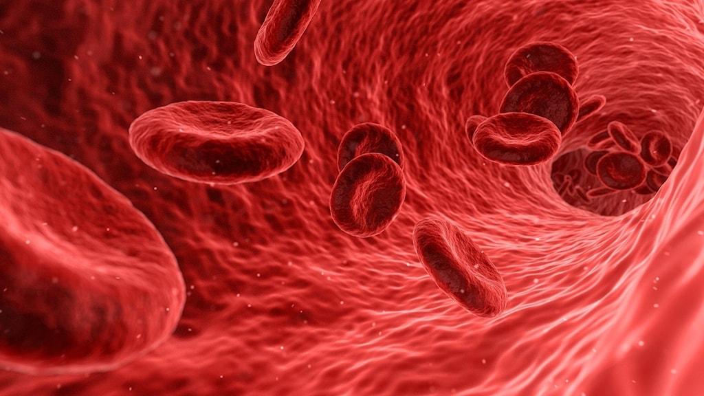 Blodkroppar i blodbanan.