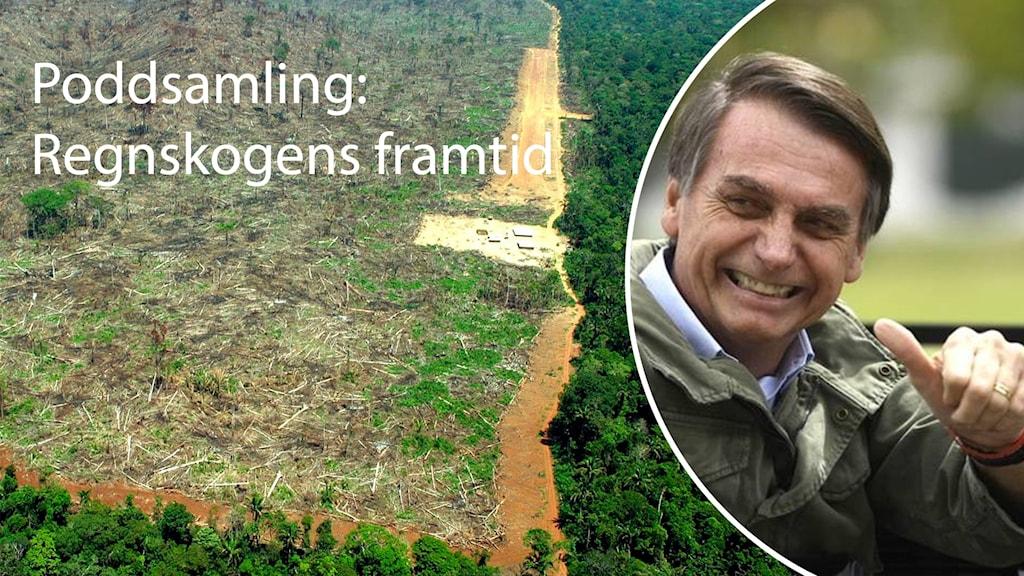 Delad bild där den vänstra visar en skölad del av Amazonas. Och den högra visar den brasilianska presidenten Jair Bolsonaro.