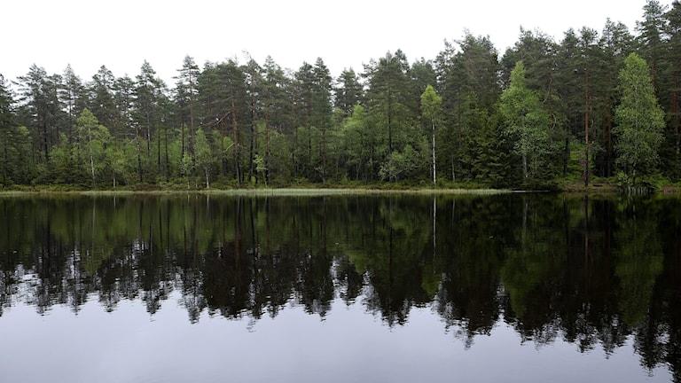 Skog som speglar sig i en sjö.