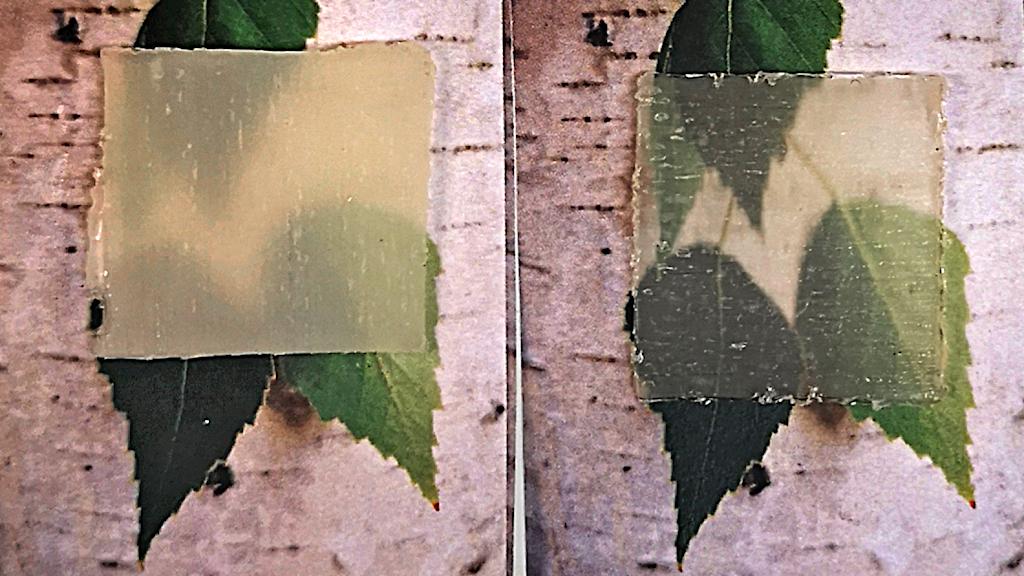 Två intilliggande bilder av transparant trä över björklöv.