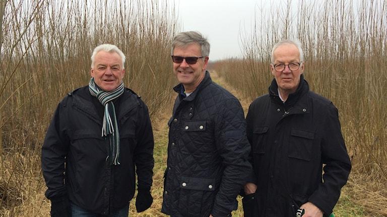 Kenth Hasselgren, Sten Segerslätt, Stig Larsson vid salixodling i Bällinge utanför Landskrona.