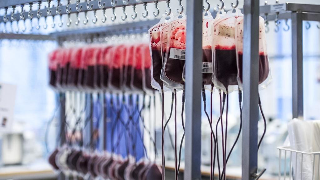 Blod i olika genomskinliga påsar som hänger från en stång.