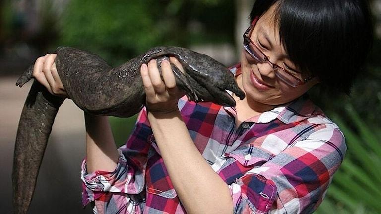Forskaren Jing Che håller upp en jättesalamander.