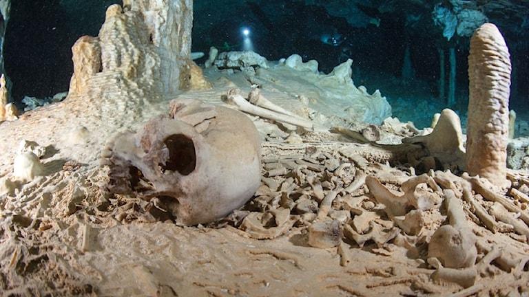 Ett kranium och ben från mänskliga kvarlevor i en undervattensgrotta i Mexiko.