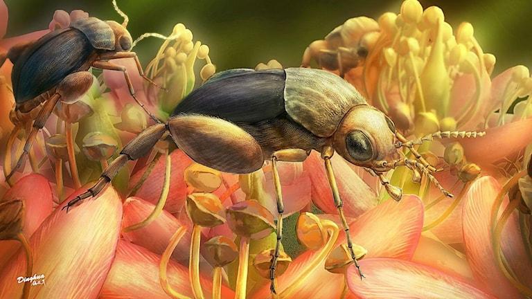 en illustration av hur en förmodligen pollinerande skalbagge från Kritaperioden kan ha sett ut när den levde.