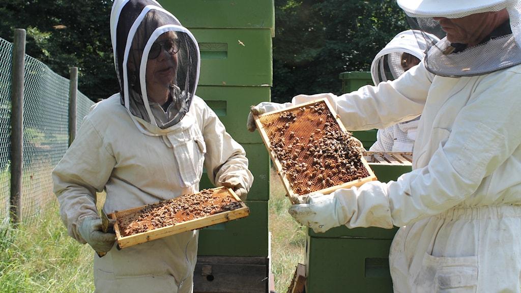 Biskötaren Ann-Charlotte Berndtsson och forskningschefen Mats Niklasson på Nordens ark vid bikupor som ingår i ett av deras forskningsprojekt.