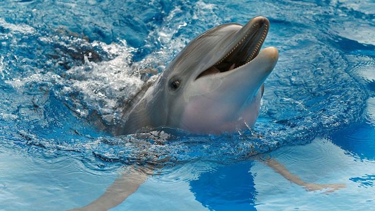 delfin som ler