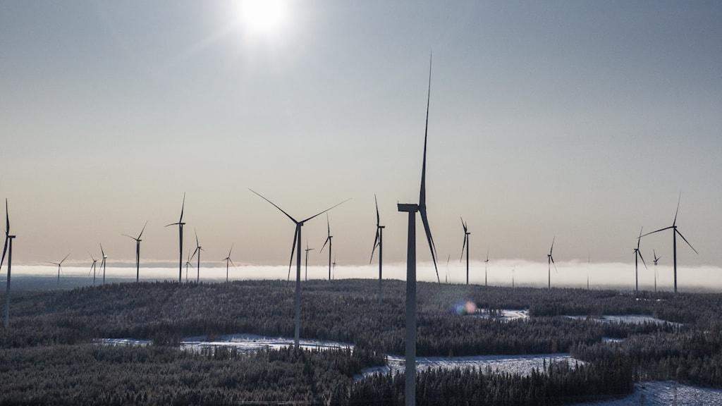 En vindkraftspark fotad med solen i bakgrunden