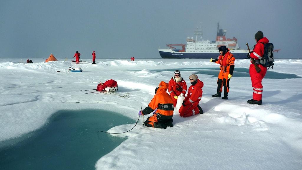 En grupp med polarforskare på havsisen i Arktis där de samlar in isprover.
