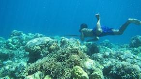 Fridykare i korallrev.