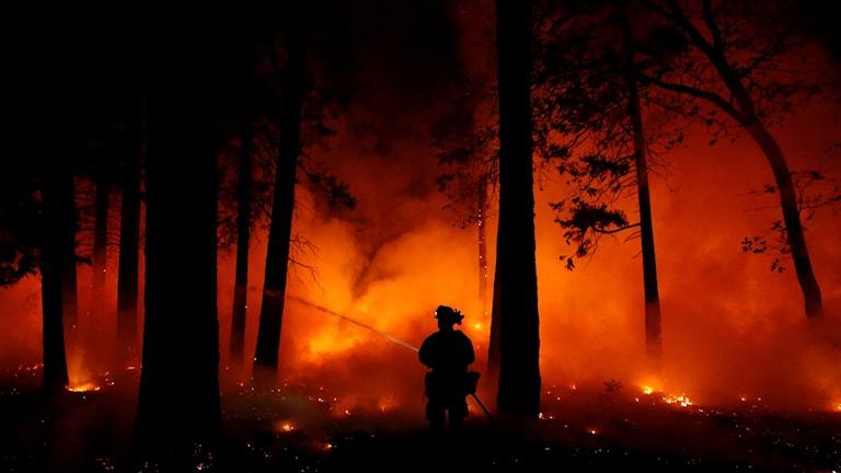 En ensam brandman framför brinnande skog.