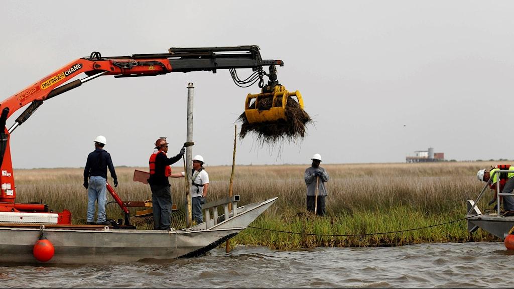 Grävskopa på båt gräver upp stor oljeklump i våtmark.