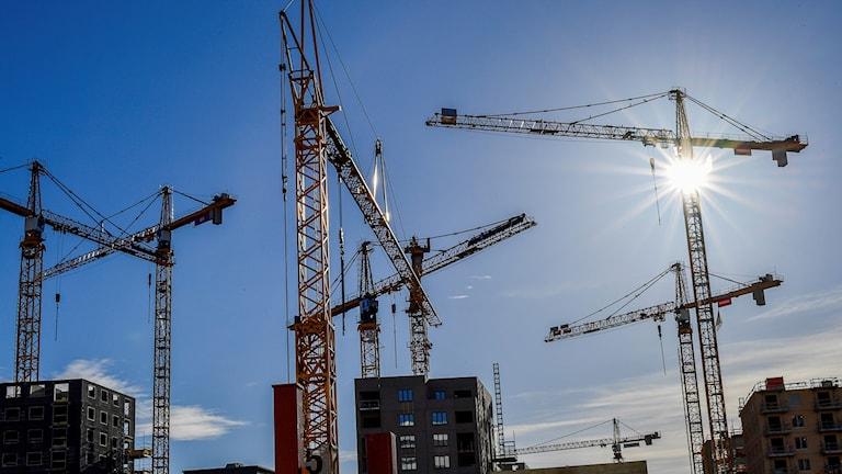 Flera byggkranar mot en blå himmel.