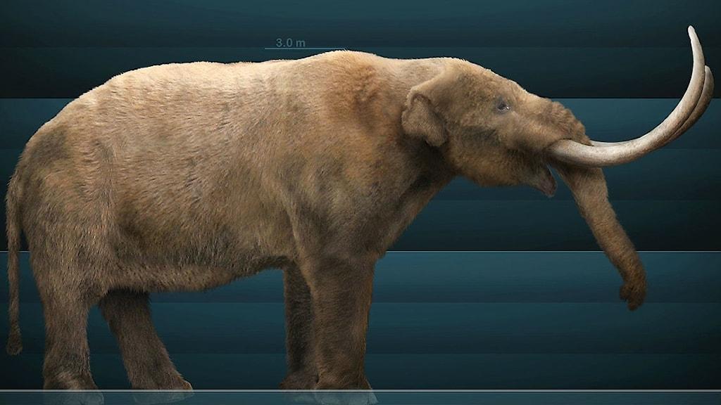 Grafisk konstruktion av en mastodont utifrån paleontologiska fakta.