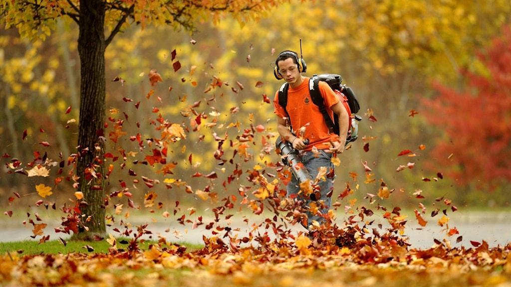 En man iklädd orange ti-shirt står på en gräsmatta och håller i en maskin fäst till en ryggsäck. Gula och röda löv far runt omkring.