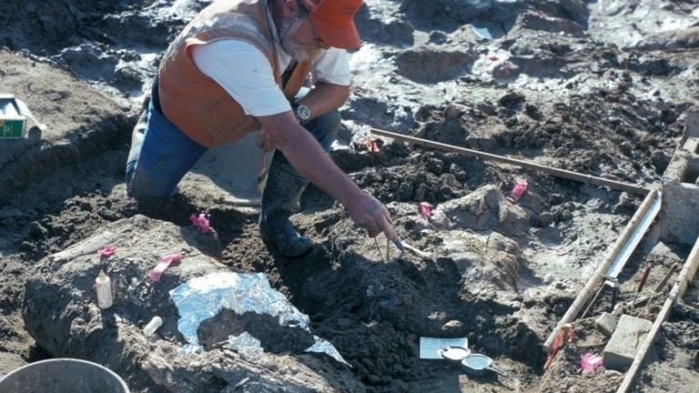 Paleontologen Don Swanson från San Diegos naturhistoriska museum pekar ut sten invid ett stort fragment från en mastodontbete.
