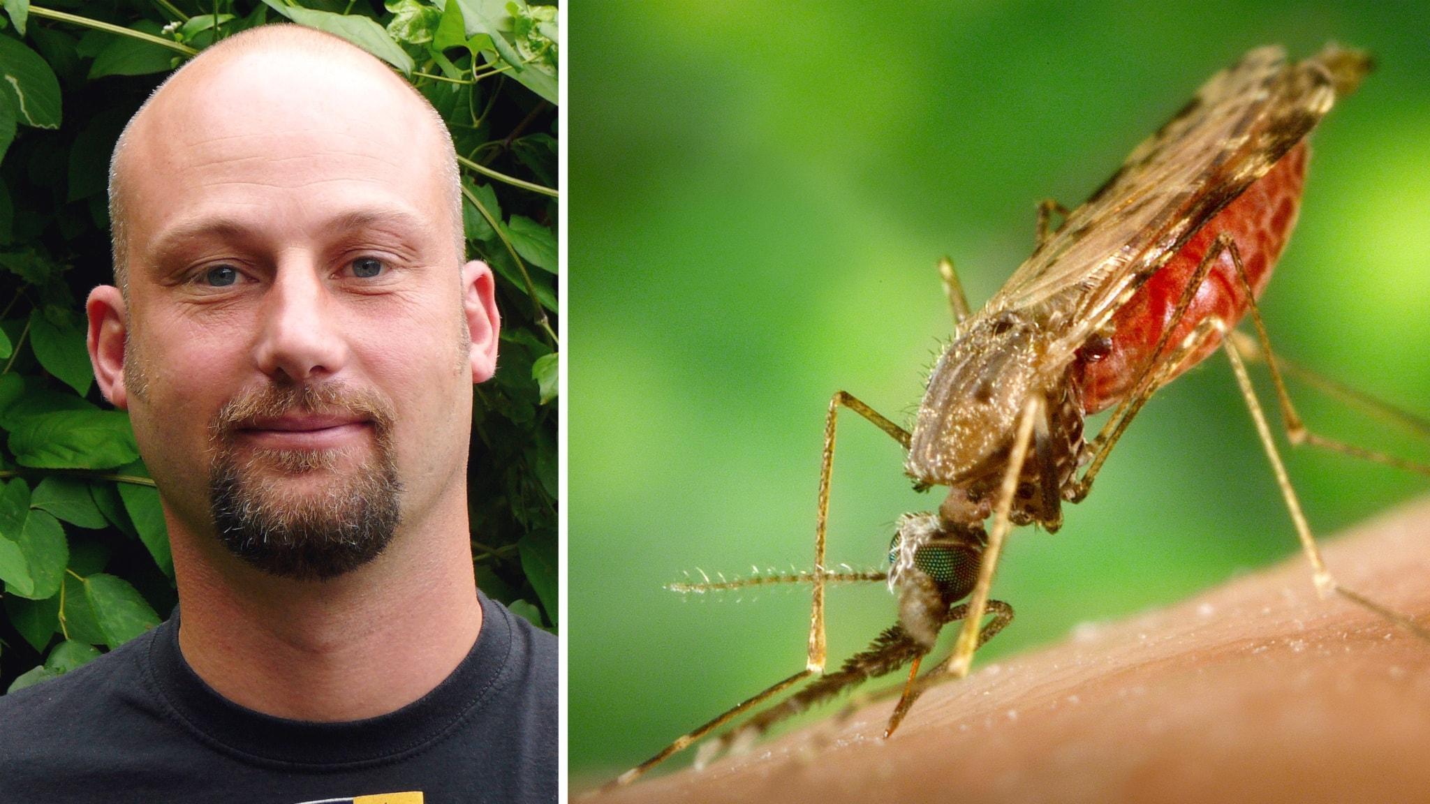 medel mot malaria